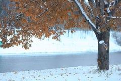 Текстура предпосылки ветви осени Стоковые Фотографии RF