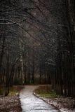 Текстура предпосылки ветви осени Стоковые Фото