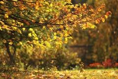 Текстура предпосылки ветви осени Стоковое Изображение RF