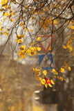 Текстура предпосылки ветви осени Стоковое Изображение