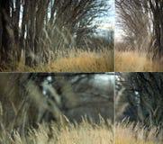 Текстура предпосылки ветви осени Стоковые Изображения