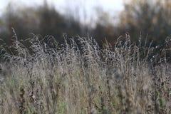Текстура предпосылки ветви осени Стоковое Фото