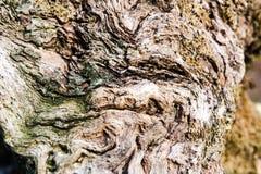 Текстура предпосылки деревянных свирлей органическая Стоковые Фотографии RF