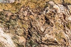 Текстура предпосылки деревянных свирлей органическая Стоковое Фото