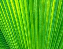 текстура предпосылки зеленая Стоковые Изображения
