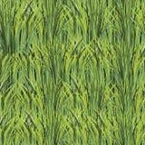 Текстура предпосылки зеленой травы безшовная Стоковое Изображение