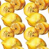 Текстура предпосылки картины цитрусовых фруктов лимона акварели желтая безшовная Стоковое фото RF