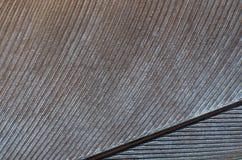 Текстура предпосылки конца-вверх пера голубя Стоковые Изображения