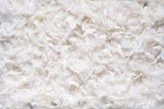 Текстура предпосылки мягких белых feathes Стоковые Фотографии RF