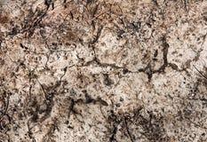 Текстура предпосылки сухой почвы Стоковое Изображение