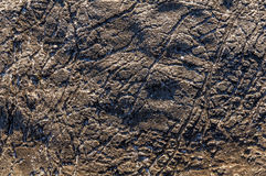 Текстура предпосылки текстуры камня моря Стоковое Изображение