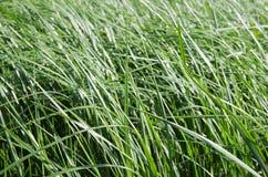 Текстура предпосылки травы - изображение запаса Стоковые Изображения RF
