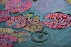 текстура пруда поверхностная Стоковое Фото