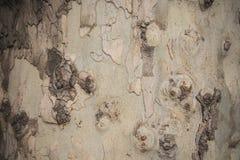 Текстура плоского дерева Стоковая Фотография
