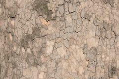 Текстура плоского дерева Стоковая Фотография RF