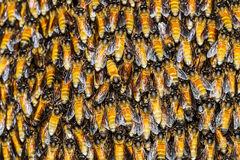 Текстура работника пчелы держа совместно Стоковое фото RF