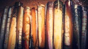 Текстура раковины бритвы Стоковая Фотография RF
