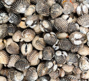 текстура раковины моря предпосылки Стоковая Фотография RF