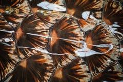 Текстура раковины предпосылки carapace черепахи стоковые изображения