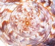текстура раковины Стоковое Изображение