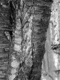 Текстура 01 - расшива дерева Стоковое фото RF