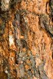 текстура расшивы влажная Стоковое Изображение RF