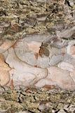 Текстура расшивы дерева безшовная текстура Справочная информация Стоковые Изображения