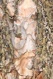 Текстура расшивы дерева безшовная текстура Справочная информация Стоковые Изображения RF