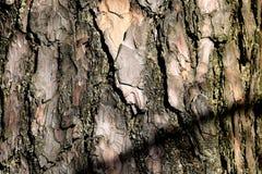 Текстура расшивы дерева безшовная текстура Справочная информация Стоковые Фотографии RF