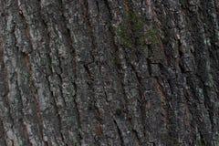 Текстура расшивы дерева Стоковые Фотографии RF