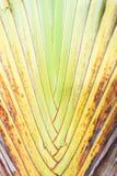 Текстура расшивы дерева Стоковая Фотография