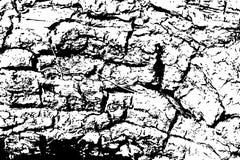 Текстура расшивы дуба с отказами Иллюстрация вектора тимберса на прозрачной предпосылке Стоковые Фото