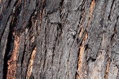 Текстура расшивы евкалипта стоковое изображение rf