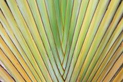 Текстура расшивы дерева Стоковое Фото