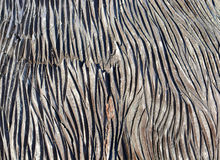Текстура расшивы дерева Стоковая Фотография RF