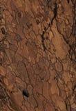 Текстура расшивы золота Стоковое Изображение
