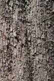 текстура расшивы предпосылки естественная Стоковое Изображение RF