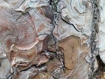 Текстура расшивы древесины Стоковое фото RF