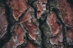 Текстура расшивы сосны Предпосылка сосны Абстрактные текстура и предпосылка для дизайнеров Естественная картина Стоковое фото RF