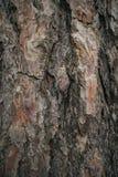Текстура расшивы сосны Предпосылка сосны Абстрактные текстура и предпосылка для дизайнеров Естественная картина Стоковые Фото