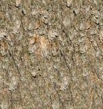 Текстура расшивы сосны Стоковые Изображения