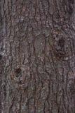 Текстура расшивы сосны Стоковое фото RF