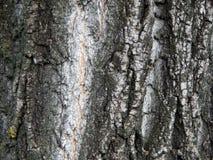 Текстура расшивы старого плодоовощ Стоковое Изображение