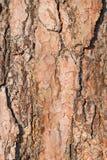 Текстура расшивы старого цвета с глубокими отказами, крупный план коричневого цвета сосны дерева, Стоковая Фотография RF