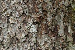 Текстура расшивы яблони, структуры предпосылки Стоковая Фотография
