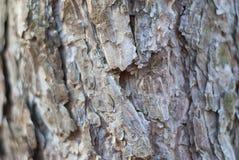 Текстура расшивы Стоковая Фотография RF