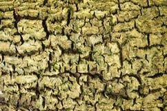 Текстура расшивы Стоковое фото RF