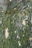Текстура расшивы Стоковые Фотографии RF