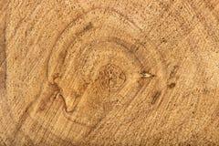Текстура древесины в отрезке Стоковые Фотографии RF