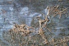 Текстура древесины и сена Стоковые Изображения RF